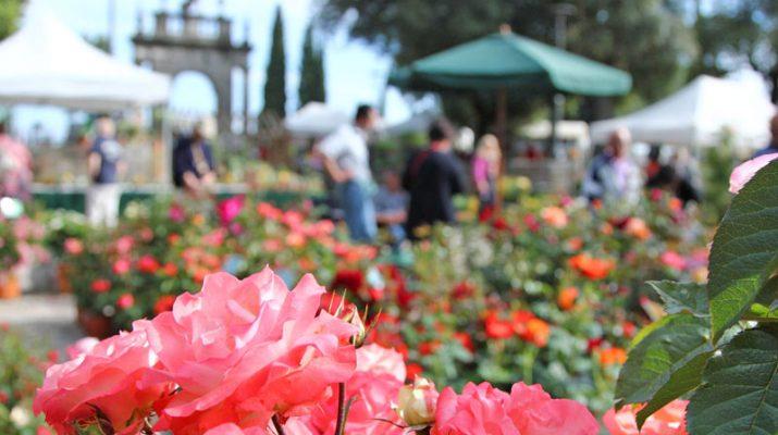 Foto Primavera in viaggio: Italia in fiore