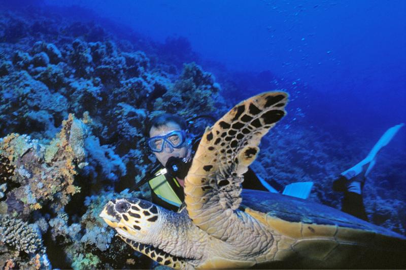 Sharm el Sheikh sott?acqua