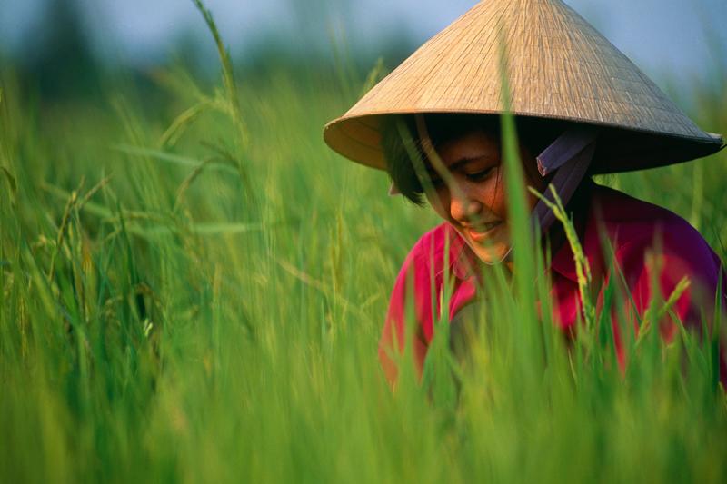 L'ultimo Vietnam