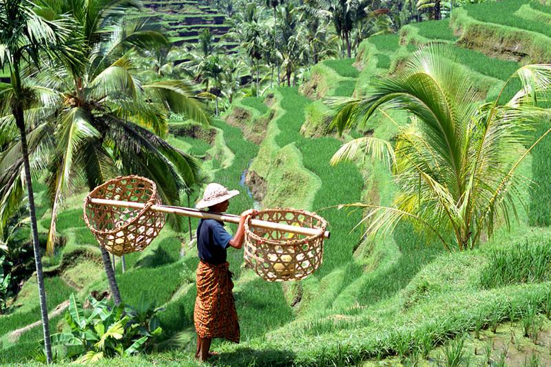 Bali: l'estate come piace a noi