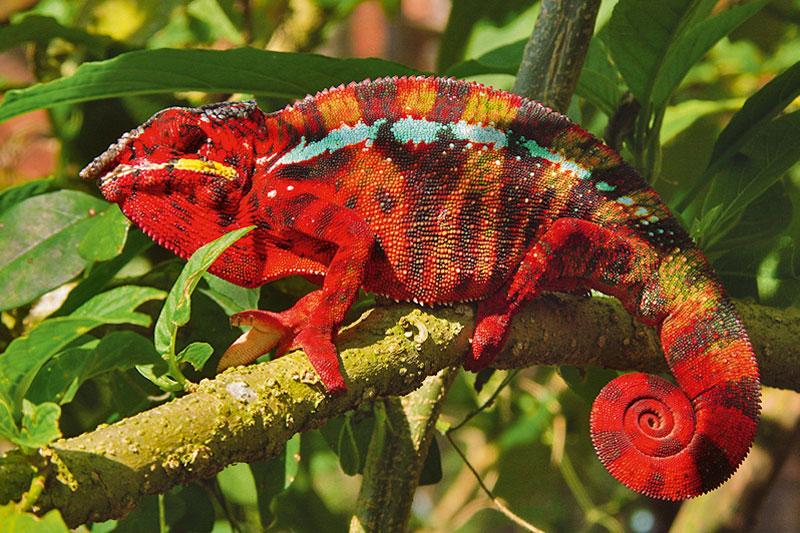 Madagascar, il fascino del selvaggio