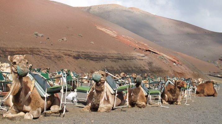Foto L'estate dei vulcani a Lanzarote