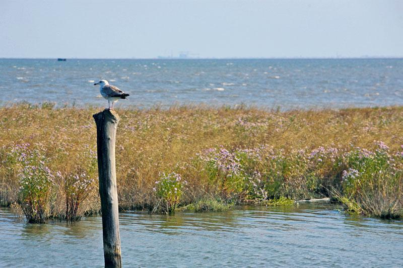 Laguna magica e segreta: Venezia (e isole) in vaporetto