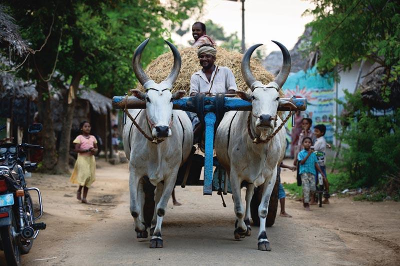 Tamil Nadu: il cuore segreto dell'India