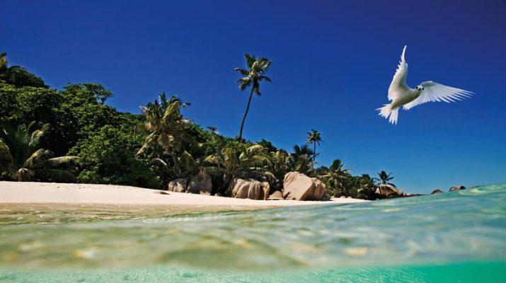 Foto Seychelles: mare da sogno