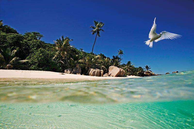 Seychelles: mare da sogno