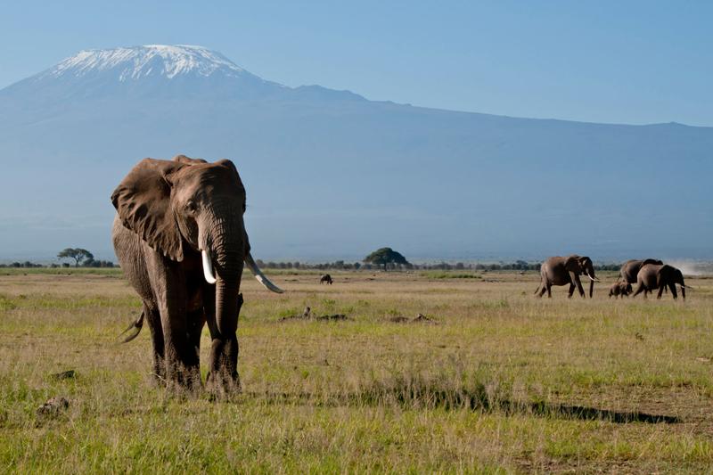 Kenya, mare e safari con tutta la famiglia