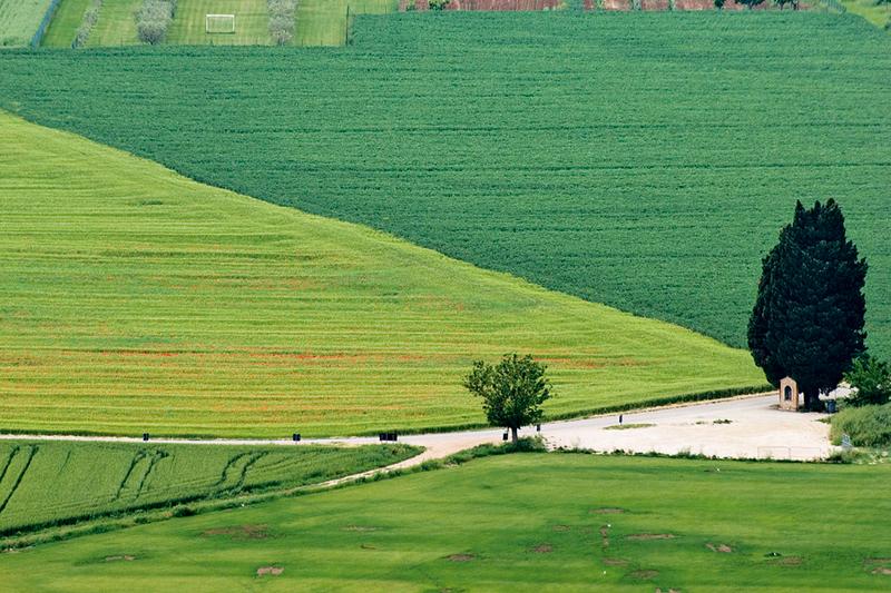 Ad Assisi nel bosco riaperto dal Fai, sulle tracce di San Francesco