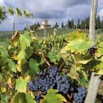Sapori di Chianti, tra enoteche e macellerie