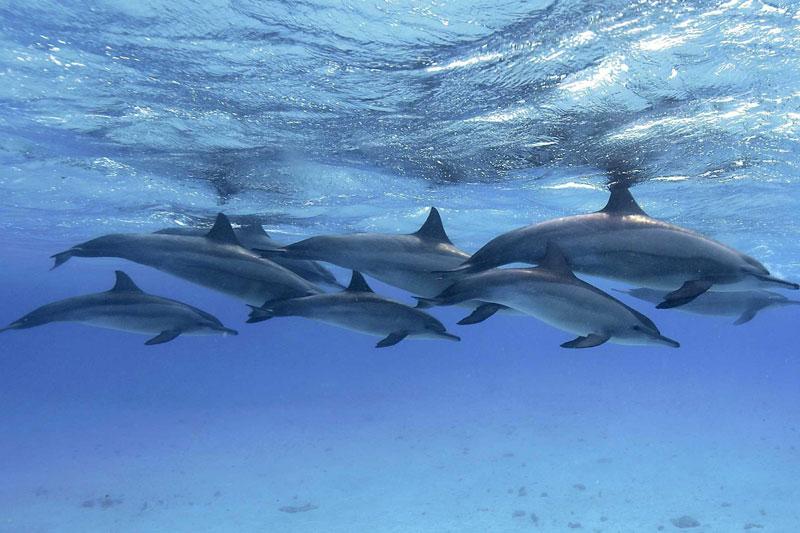 """""""TripAdvisor"""" e la tutela degli cetacei: ecco cosa ha proposto!!"""