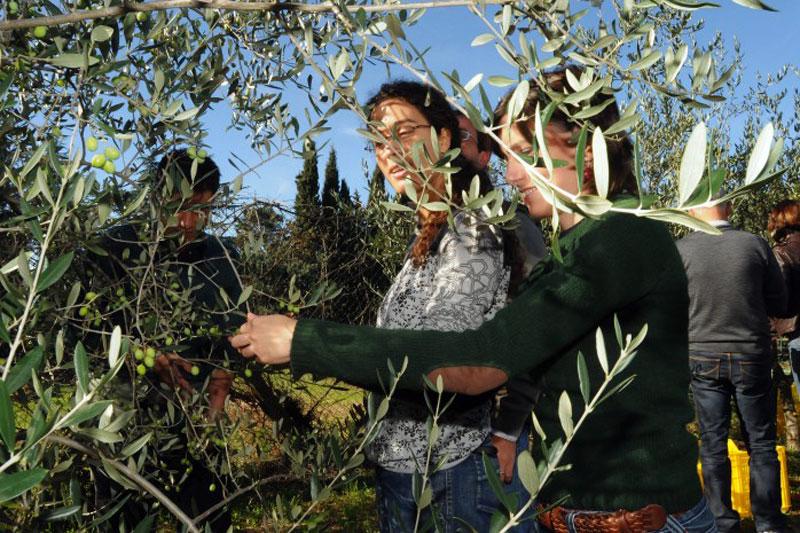 Frantoi Aperti, sapore d'Umbria