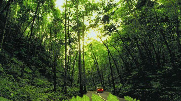 Foto Giamaica: dove vive Madre Natura