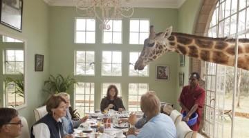 giraffe-manor-12-kO3H-U430001643990862r2G-960×451@Viaggi-Web