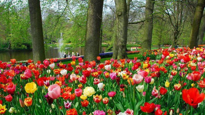 Foto Keukenhof, l?Olanda più bella in fiore