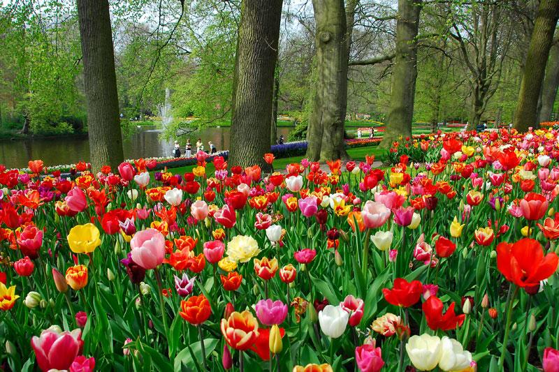 Apre Le Porte Fino Al 20 Maggio Il Più Bel Parco Botanico Al Mondo. Oltre  30 Ettari Ricoperti Da 7 Milioni Di Bulbi Dove Riscoprire Lu0027amore Per La  Natura.