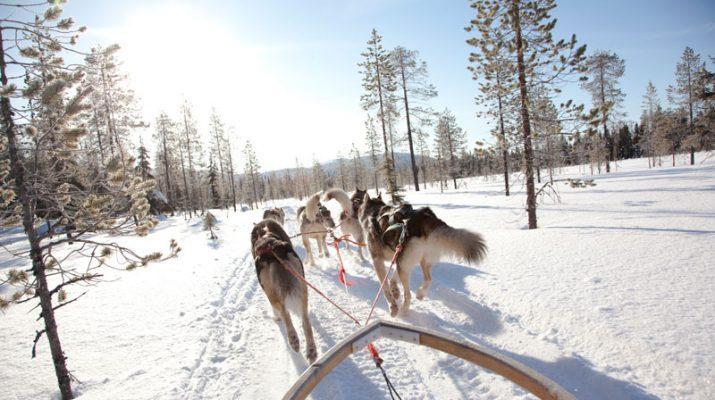 Foto Novelli Jack London in Finlandia, su una slitta trainata dagli husky