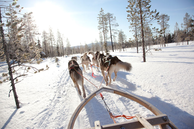 Novelli Jack London in Finlandia, su una slitta trainata dagli husky