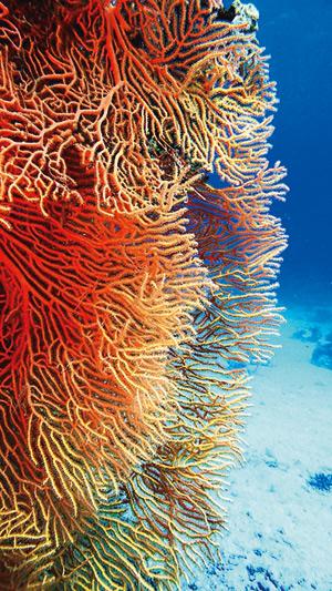 Mar Rosso segreto, lusso accessibile