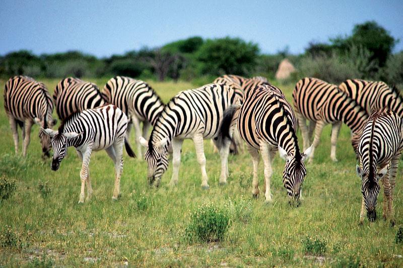 Namibia: safari tra le belve