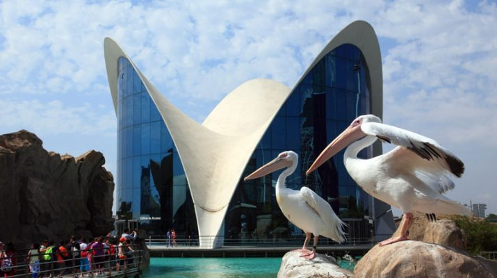 Foto A Valencia, per esplorare l'Oceano