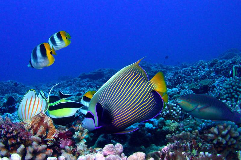 In Polinesia: solo una volta… O per tutta la vita