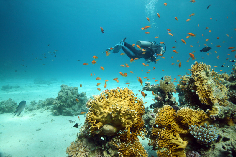Sharm el Sheikh, lusso ed escursioni low cost