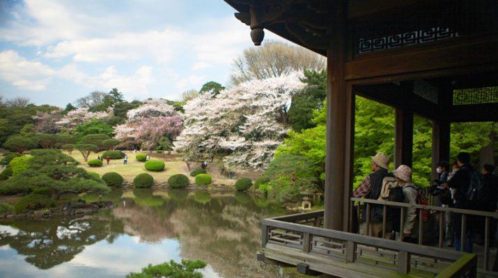 Foto Tokyo, primavera in fiore