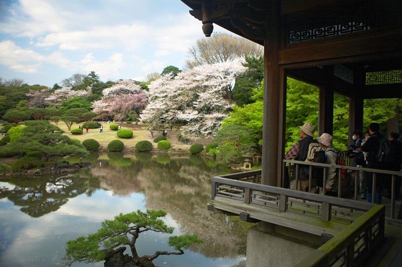 Tokyo, primavera in fiore