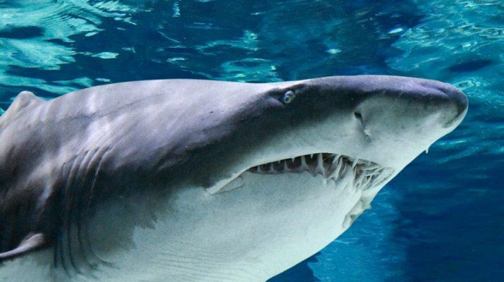 Foto All'acquario di Cattolica, tra lontre mascherate e squali toro
