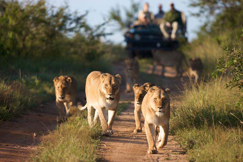 Estate in Sudafrica, safari al fresco