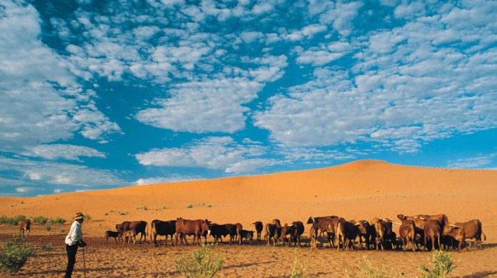 Foto Splendido Sudafrica, tra elefanti, pinguini e balene