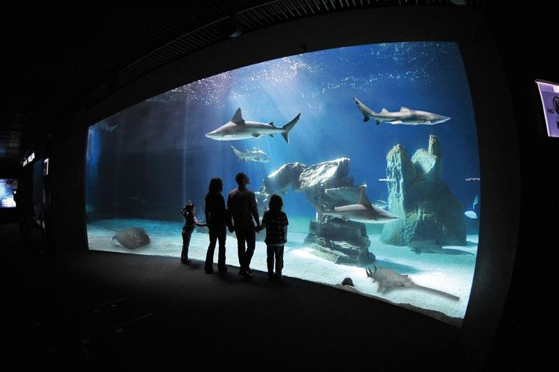 Genova: una notte con lo squalo