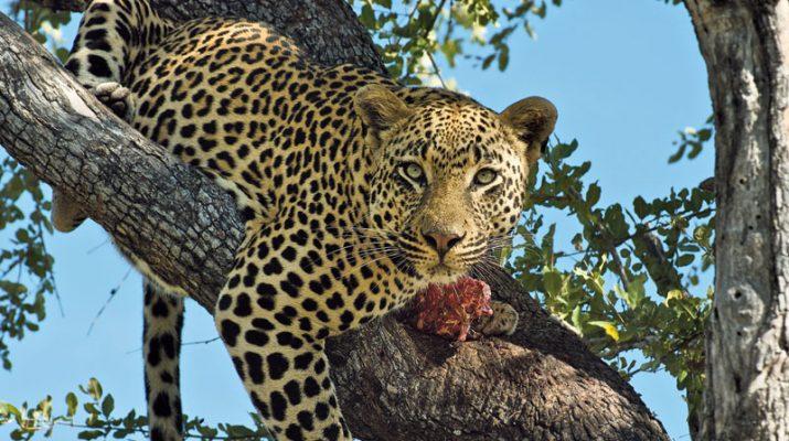 Foto Zambia: risalendo lo Zambesi