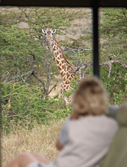 Zanzibar: spiagge bianche e safari