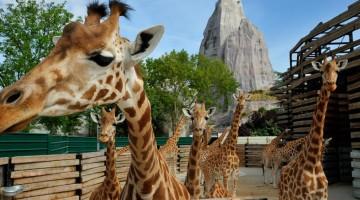 zoo-vincennes-parigi-30-kipC-U4301015702414361OG-960×451@Viaggi-Web