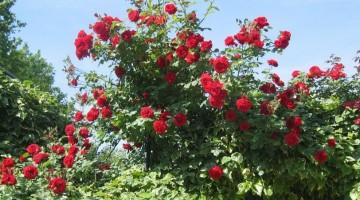 rose-rosseok-kzhG-U43020262025328L6B-960×451@Viaggi-Web3