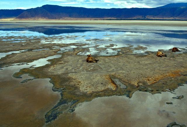 L'immensa caldera del Ngorongoro Crater ,   uno degli scenari più grandiosi del Continente Nero: i