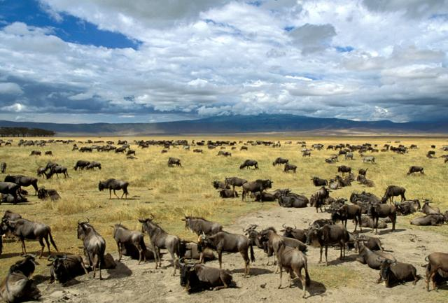 Mal d'Africa: la Tanzania dei grandi animali