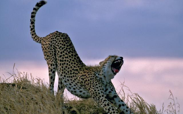 Foto Mal d'Africa: la Tanzania dei grandi animali