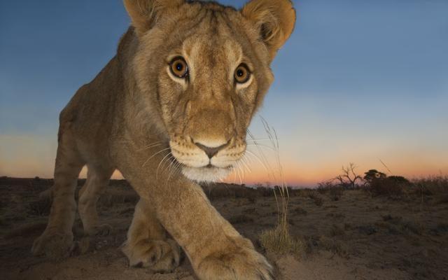 Foto Wildlife Photographer  of the Year:  la Natura dà spettacolo a Milano