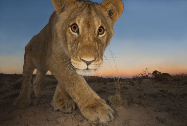 Wildlife Photographer  of the Year:  la Natura dà spettacolo a Milano
