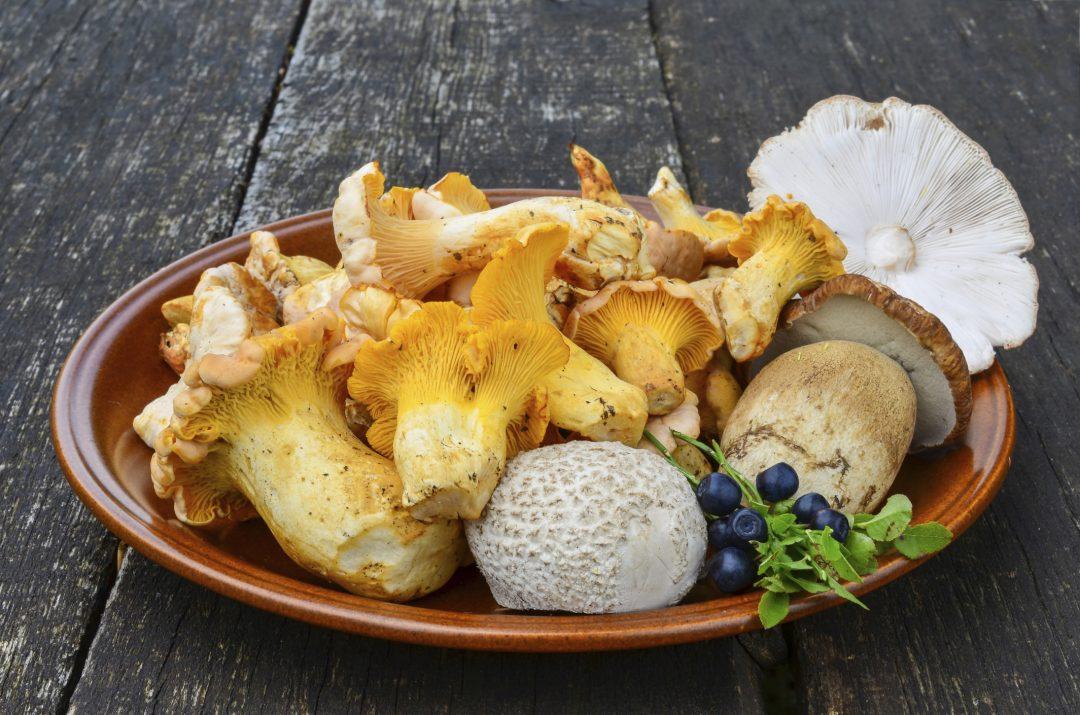 Funghi: dove gustare porcini e tartufi