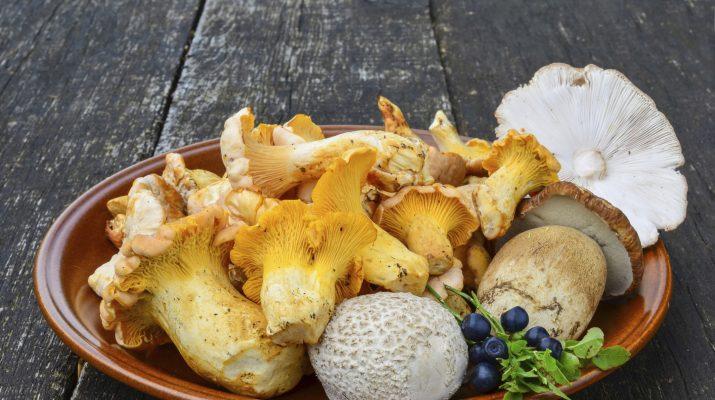 Foto Funghi: dove gustare porcini e tartufi