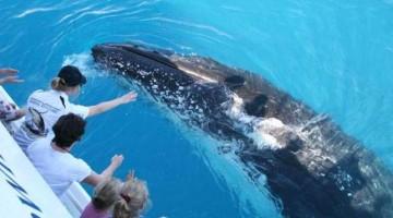 australia-whales-4-kTxC-U430401026018942cND-960×451@Viaggi-Web