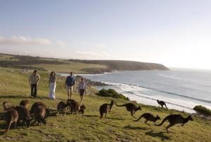 Speciale Australia: la grande natura