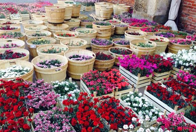 Flora et Decora. Rinasce S.Ambrogio, nel segno dei fiori
