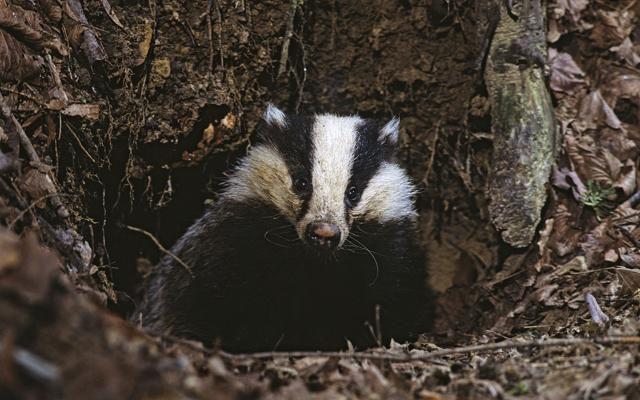 Foto Animali: incontri di Primavera nei  boschi dell'Appennino