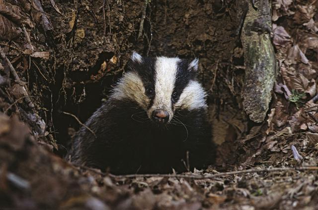 Animali: incontri di Primavera nei  boschi dell'Appennino
