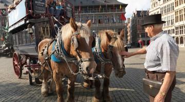 Anversa. Una tipica carrozza per turisti