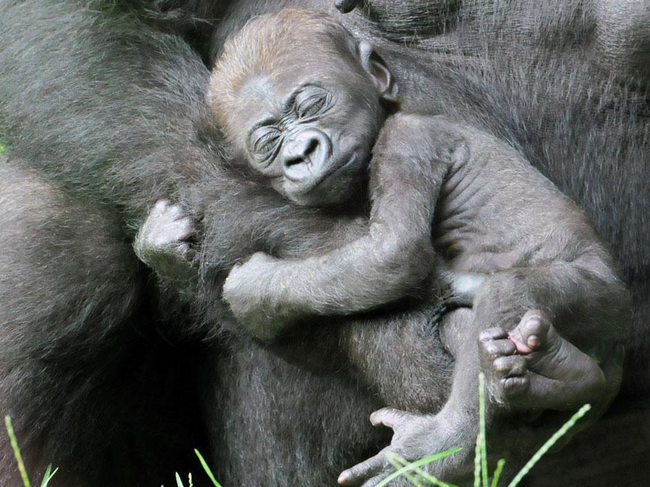 Gli scimmiottini più simpatici